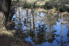 The reflection of trees in a woodland lake Stock Photography