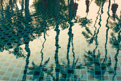 Reflection of tropical palm trees in the pool water. Nature. Stock Photography