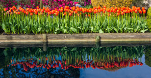 Reflection of Tulip Flowers. Water reflection of tulips and flowers on bright sunny day royalty free stock photography