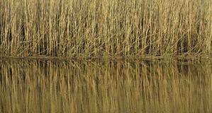 Reflection of vegetation Stock Image