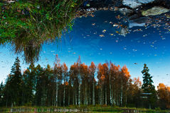 Reflection in water. Specular reflection in the water timber. Autumn weather Royalty Free Stock Photos