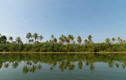 Reflection in a water. Reflection in river in backwaters, Kerala Royalty Free Stock Images