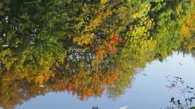 Reflection in water. Autumn trees are reflected in the lake stock video footage