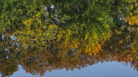Reflection in water. Beautiful colorful trees reflected in the water of the lake stock video footage