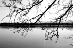 Reflection, Water, Branch, Nature stock image