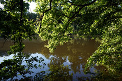 Reflection on the water. And branches of tree in the forest Royalty Free Stock Image