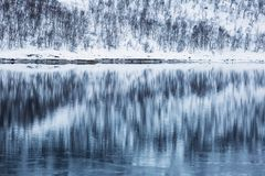 Reflection in water of a forest in winter time. Reflection in water of a forest in winter time Royalty Free Stock Photos