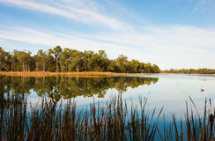 Reflection In Water, Kings Billabong, Australia. Royalty Free Stock Images