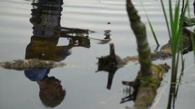 Reflection in the water of a man in a scuba. That holds a mask stock footage