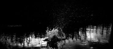 Reflection, Water, Nature, Black Stock Photography