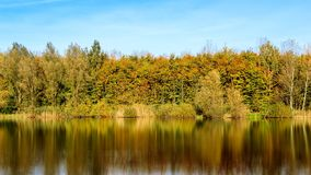 Reflection, Water, Nature, Leaf stock photography