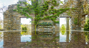 Reflection on water. Reflection of plant and stone wall on water royalty free stock image