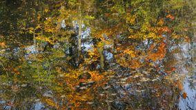 Reflection in water. Reflection of the autumn forest in the lake stock video footage