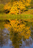 Reflection in the water the tree with yellow leaves Royalty Free Stock Photo