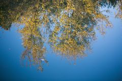 Reflection on the water the trees in autumn outdoors.  royalty free stock image