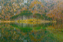 Reflection of the wood in  lake Royalty Free Stock Photo