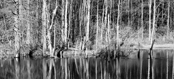 Reflection of woods Royalty Free Stock Images