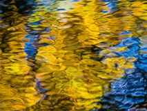 Reflection of yellow leaves Stock Image