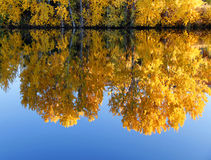 Reflection of yellow trees in blue river Royalty Free Stock Photography