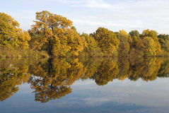 Reflection of yellow trees in water Stock Image