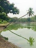 #reflections, árvores, rio, sombra, reflexão Fotos de Stock Royalty Free