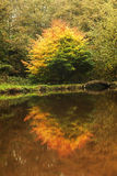 Reflections. Autumn reflections in a still lake Royalty Free Stock Photos