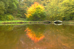 Reflections. Autumn reflections in a still lake Stock Photography