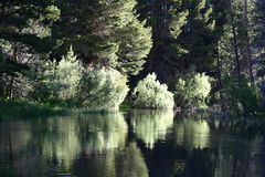 Reflections. Trees reflecting in the water Royalty Free Stock Image