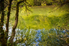 Reflections. Of tree branches on a rivers;s surface Stock Images