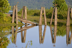 Reflections. Old pilings on a calm river day Royalty Free Stock Photos
