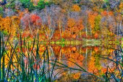 Reflections of Autumn in High Dynamic Range. Reflections of Autumn at Williams O'Brian State Park in High Dynamic Range royalty free stock photos