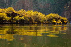 Reflections of Blooming Palo Verde Trees On An Arizona Lake Stock Images