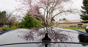 Reflections of cherry flowers in sun roof of a car Stock Photography