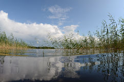 Reflections in a clean lake. With reeds Royalty Free Stock Photography