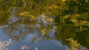 Reflections of fall in water. Time lapse shot stock video footage