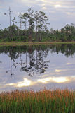Reflections in a Florida Lake Stock Photo