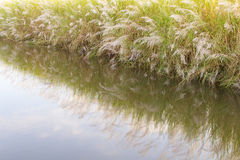 Reflections flower grass water Royalty Free Stock Photography