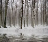Reflections in the forest during winter royalty free stock images