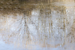 Reflections of a frozen lake Royalty Free Stock Photo