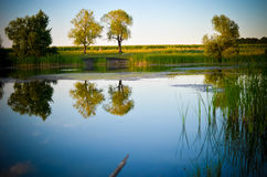 Reflections of green trees, blue sky and clouds in the calm water lake Royalty Free Stock Photo