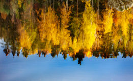 Reflections of green and yellow trees on a lake Stock Photography