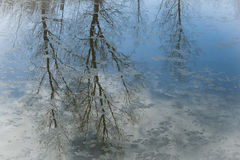 Reflections on an icy canal. Stock Images