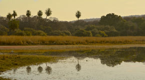 Reflections in lake at Ranthambore National Park. In the region of Rajasthan in Northern India royalty free stock image