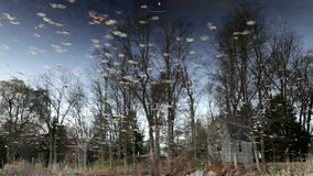 Reflections in a lake. Of trees and leaves stock video
