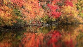 Reflections in a lake. Of trees and leaves stock footage