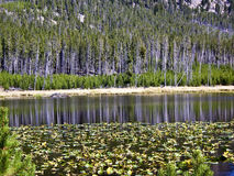 Reflections on lily pond in Yellowstone Stock Photography