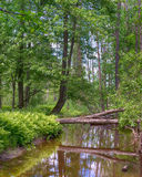 Reflections, Little Cedar River, Gladwin, MI Royalty Free Stock Photo