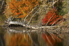 Reflections of log and fall colors in lake, Mansfield, Connecticut. Telephoto view of dead tree and bright reflections of vibrant fall foliage on the shoreline stock photo
