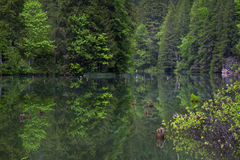 Reflections on a mountain lake Royalty Free Stock Photo