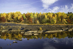Reflections On River,autumn Stock Photos